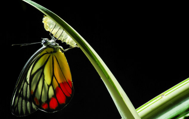 A picture of a butterfly hanging from a plant